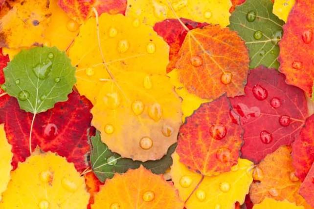 colores-hojas-otoño