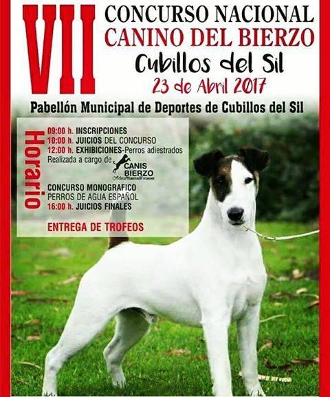 VII Concurso Nacional canino del Bierzo 2