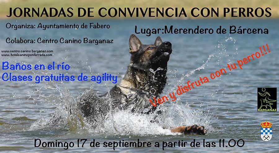 Jornada de convivencia con perros