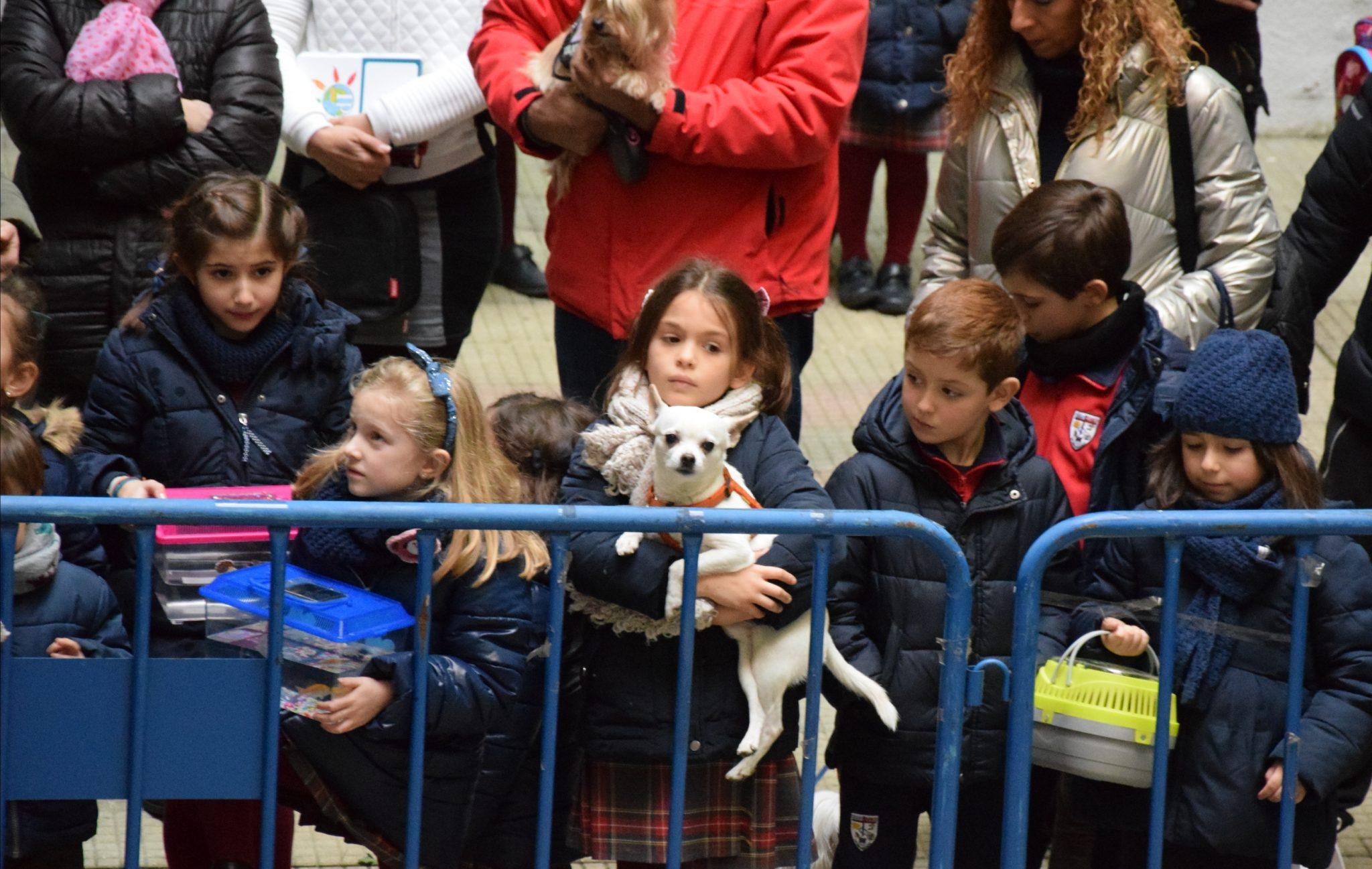 Mascotas y alumnos de San Ignacio celebraron la festividad de San Antón 4