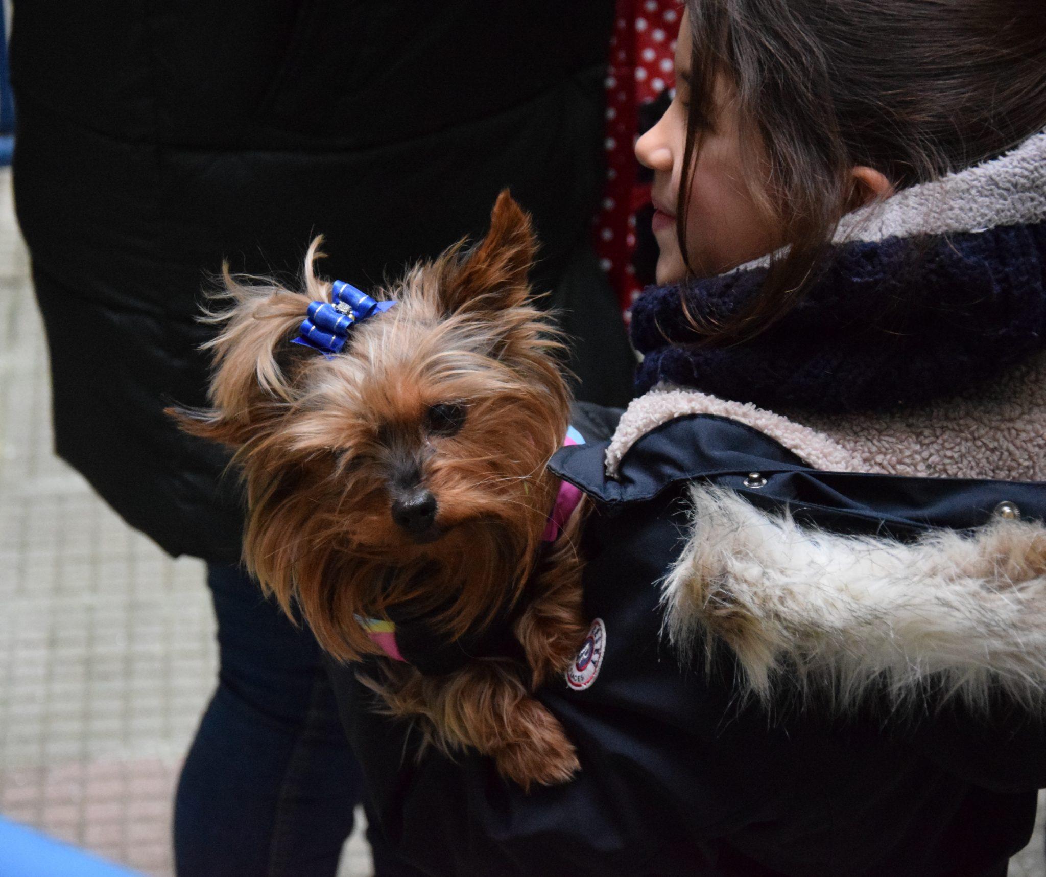 Mascotas y alumnos de San Ignacio celebraron la festividad de San Antón 5