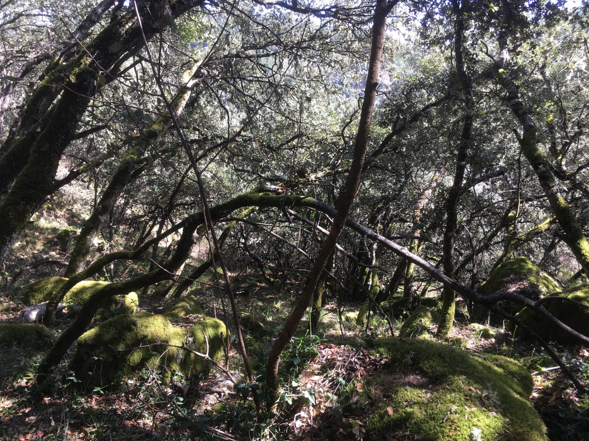 Senda de los Canteros. De Ponferrada a San Miguel de las Dueñas por la ribera del Boeza 9