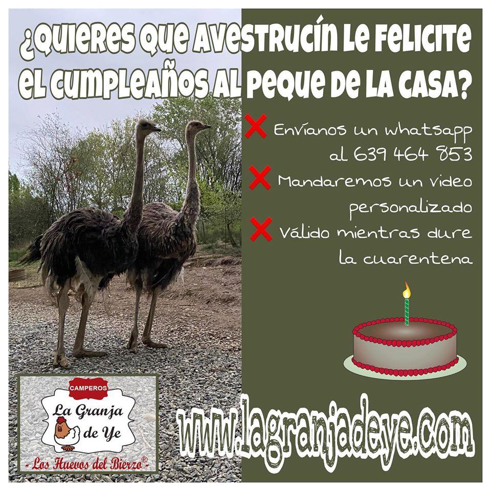 ¿Quieres que un avestruz te felicite el cumpleaños? La divertida iniciativa de 'La Granja de Ye' para los niños 2